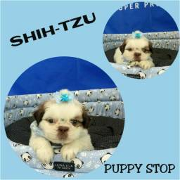 Shih-tzu Machinho Bebê - Microchipado - Parcelado 12X