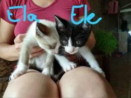 Doa-se Lindos filhotes de gatinhos