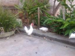 Casal mini garnize branco