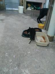 Doação de filhotes de gatos* (Somente os filhotes.)