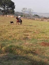 Vendo esse cavalo tem 6 anos