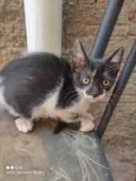 Gatinhos para adoção responsável em Goianira