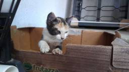 Doacao gatinha