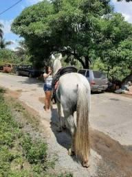 Título do anúncio: Cavalo inteiro