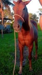 Vendo cavalo quarto de milha ou negócio