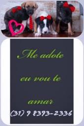 Título do anúncio: Cães para Adoção