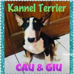 Título do anúncio: Bull Terrier Filhotes Alto Nível