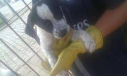 Doa-se cachorras de 3 meses