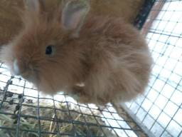 A sensação dos coelhos mini