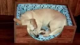 Lindas camas e berços pet!!!!!!