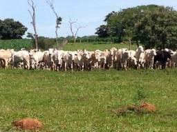 Fazenda Barata em Caldas Novas - GO
