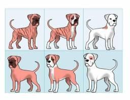 Pequeno resumo das cores do Boxer