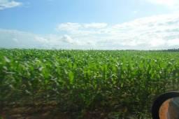 Plantando soja 40 mil o alqueire Paragominas, solo argiloso 160 alqueire zap(91)988697836