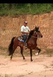 Garanhão HIMALAIA DAMASCO DF