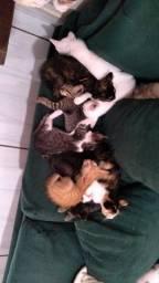 Título do anúncio: Doação de lindos felinos ferozes