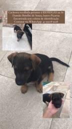 Título do anúncio: Cachorra abandonada
