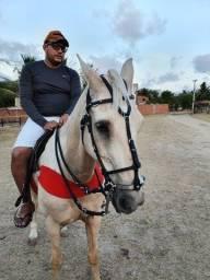 Título do anúncio: Cavalo QM