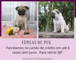 Lindas Fêmeas de Pug