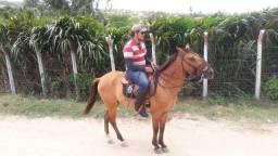 Cavalo Baixeiro Troco também