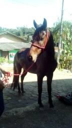 Cavalo mangalarga vendo ou troco em outro ou algo do meu interesse