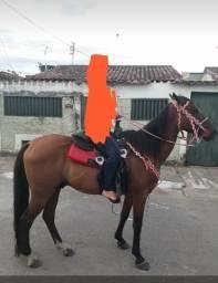 Vendo um lindo cavalo 1/2 corre no boi e muito bom pra cavalgada