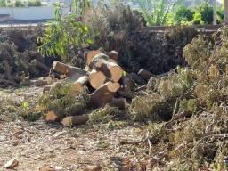 Doação de toras de madeira