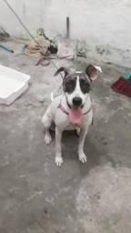 Cachorrinha para adoção