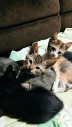 Título do anúncio: Doa-se gatinhos filhotes de diversas cores