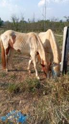 Título do anúncio: Vendo esses dois cavalos