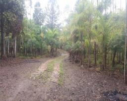 Sítio em Jacupiranga - SP com 77 hectares