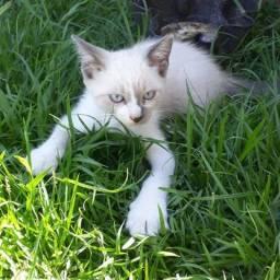 Estou doando 2 gatinhos.