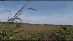 Aceito 50% em Imóveis MT,PR, 615 hectares,Pecuária,Região S.Afonso e Nova Marilândia-MT