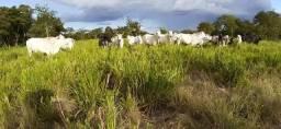 Sítio 45 ha 60 km de Cuiabá e apenas 4 km de estrada de chão (Acorizal)