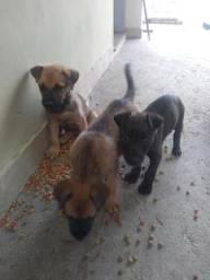 Estou doando esses cachorrinhos