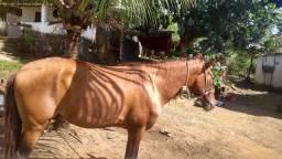 Cavalo Porto
