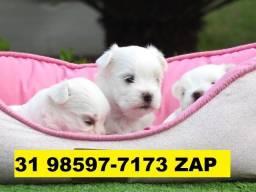 Canil Filhotes Cães Pet BH Maltês Lhasa Yorkshire Shihtzu Spitz Bulldog Pug Fox
