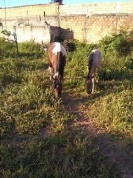 Vende esses cavalos