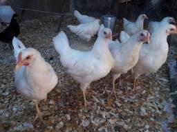 Esterco de galinha adubo para plantas e hortas
