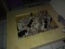 Caixa maternidade
