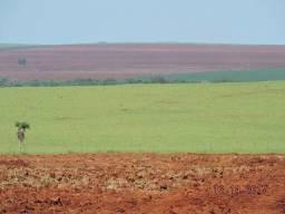 FAZENDA A VENDA EM DOURADOS MS (Agricultura)