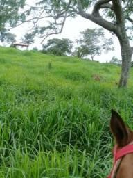 Fazenda 16 hectares arrenda