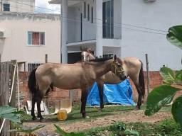 Cavalo e potranca