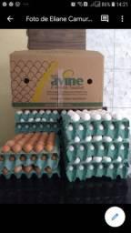 Ovos novinhos tamanhos EXTRA BRANCO E VERMELHO POR APENAS 12 REAIS E 13REAIS.