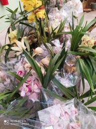 Orquídeas para recuperar