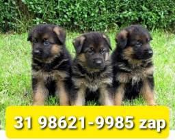 Título do anúncio: Canil Filhotes Maravilhosos Cães BH Pastor Labrador Akita Dálmata Golden Rottweiler
