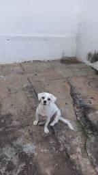 A minha cachorrinha tá no cio  tô procurando um namorado