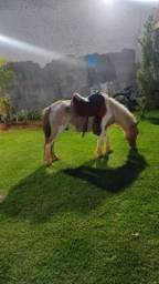 Título do anúncio: Vendo ponei