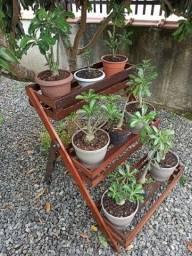 Título do anúncio: plataforma para planta