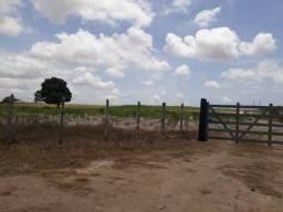 Fazenda com 20 hectares só a terra em monte alegre