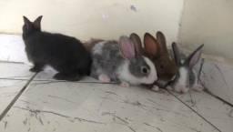 Filhotes de coelho*LEIA A DESCRIÇÃO